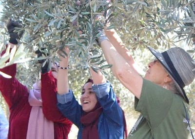 Invitation - JAI-ATG Olive Picking Program 2019